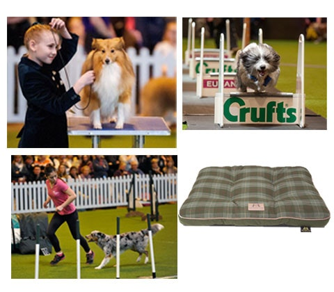 The Kennel Club sweepstakes