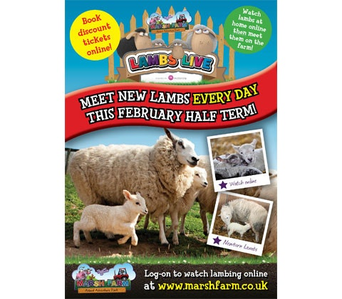 Lambing LIVE at Marsh Farm sweepstakes