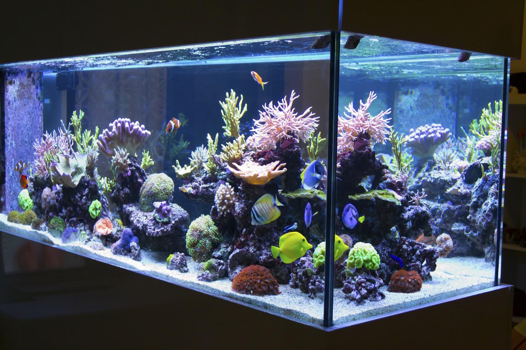 aquarium cleaning set sweepstakes