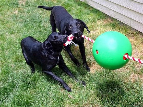 Tuggo Dog Toy sweepstakes