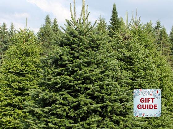 Christmas tree holiday gift guide